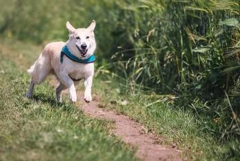Faulheit überwinden durch Laufen mit Hund