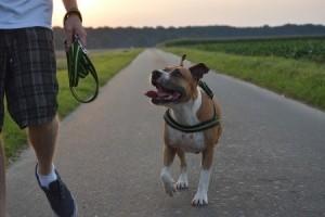 Für das Joggen mit Hund sollte der Grundgehörsam gut sein und wichtige Befehle funktionieren