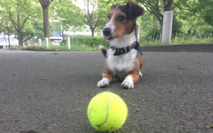 Joggen mit Hund - Gründe und Tipps