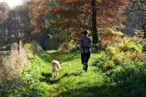 Joggingleine für das Joggen mit Hund