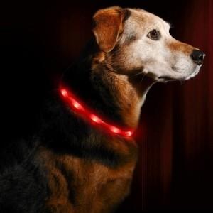 LED Hundehalsband für das Joggen mit Hund bei Dämmerung