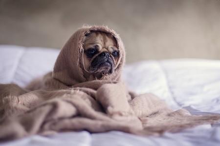 gesund schlafen besser schlafen - mit mehr energie aufwachen