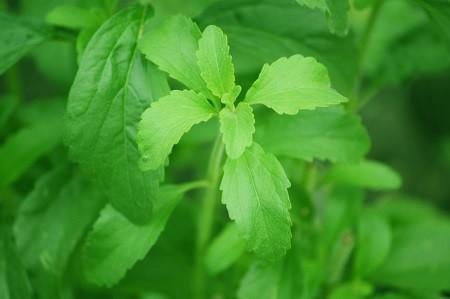 Stevia - Eine gesunde Zuckeralternative