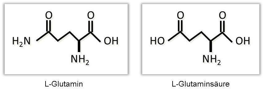 L-Glutamin und Glutaminsäure im Vergleich