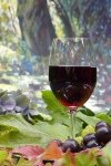 alkohol und fitness rotwein