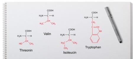 Essentielle Aminosäuren- Isoleucin Valin Threonin Tryptophan
