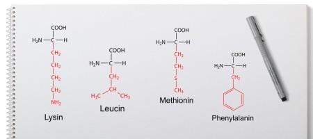 Essentielle Aminosäuren - Phenylalanin Leucin Methionin Lysin