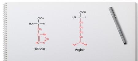 Histidin Arginin semi-essentielle Aminosäuren